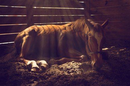 Horses, Ulcers, Reiki, & YLEO